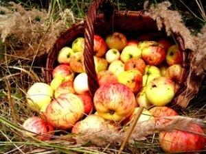 19 августа - день Преображения Господня и Яблочный Спас